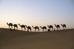 chameaux-405182