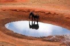 elephant-miroir-405234