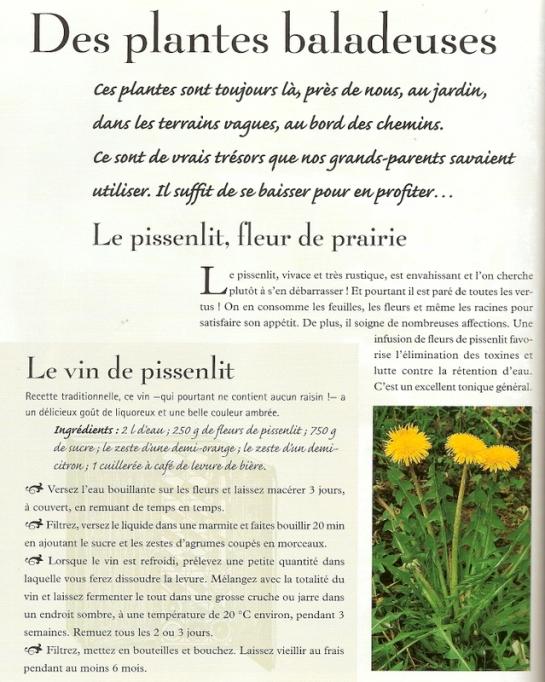 Plantes balladeuses-003