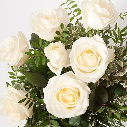 Rose-Classique-rose-blanc-zoom1