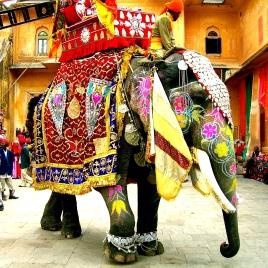 Decorated_Indian_elephant