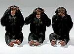 13240570 Bonobo