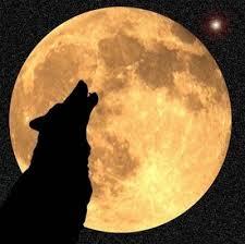 téléchargement Loup à la pleine lune