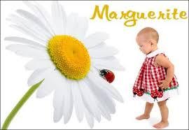 téléchargement Marguerite