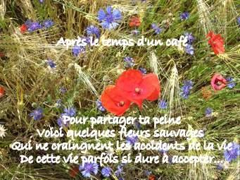 is images de champ de bleuets