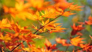 images-automne-2