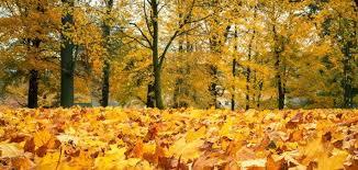 images-automne-3