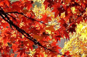 telechargement-automne-1