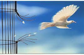 telechargement-colombe-qui-senvole
